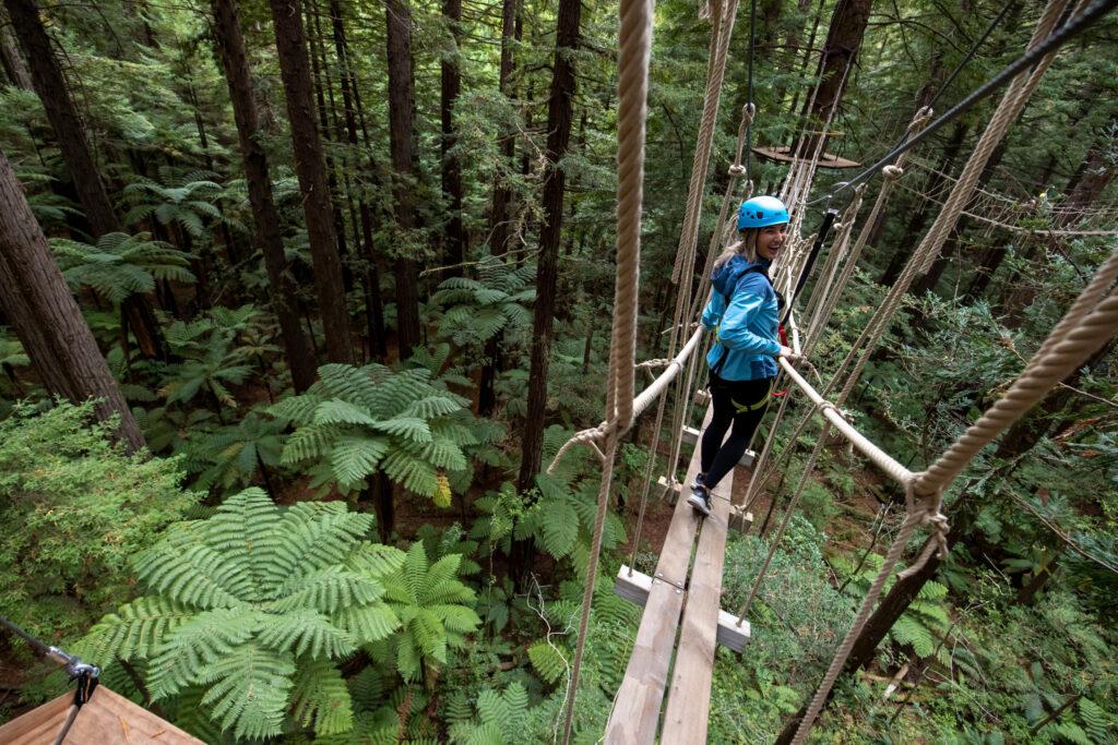 Redwood Forest Treewalk