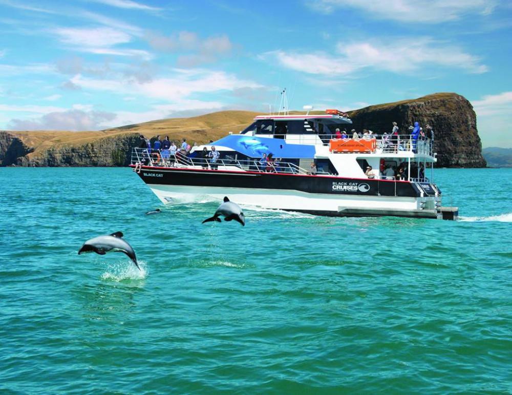 Black Cat nature cruise, Akaroa.