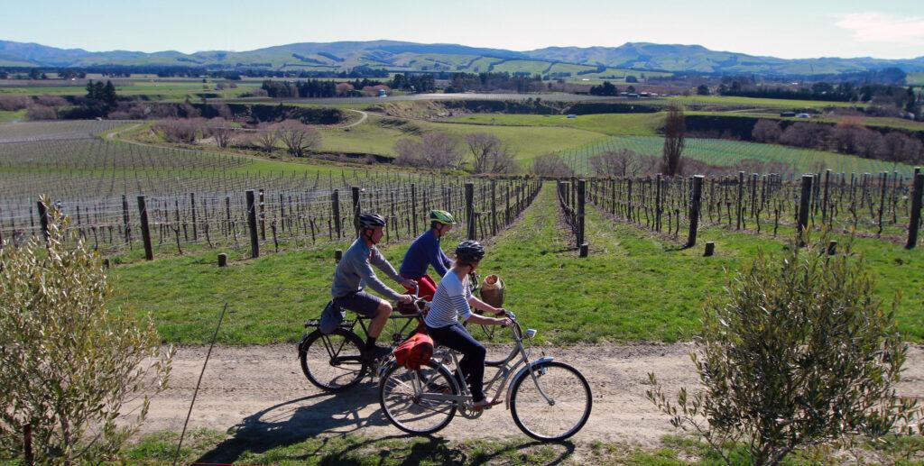 Waipara vineyard in canterbury, New Zealand.