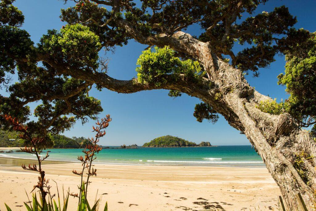 Whangarei Heads Bays. New Zealand