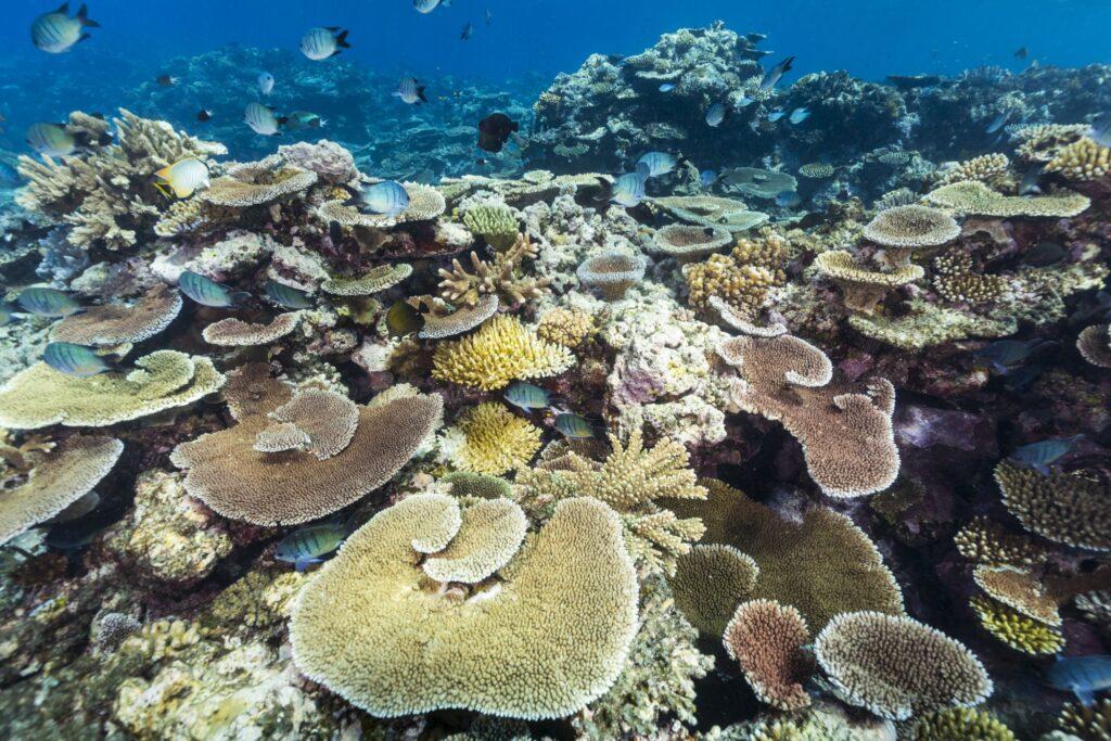 Great Barrier Reef. Queensland, Australia