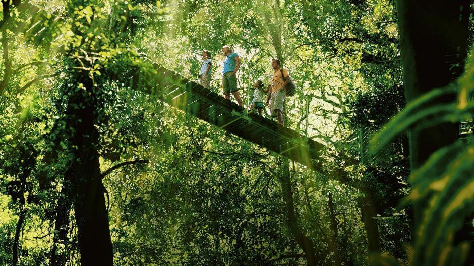 O'Reilley's Tree Top, Gold Coast