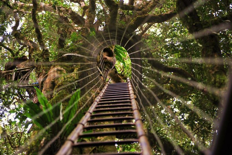 O'Reilley's Tree Top walk. Gold Coast